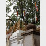 スリマハ菩提樹(アヌラダプラ)