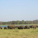 国立公園の野生の象