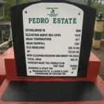 ペドロ茶園