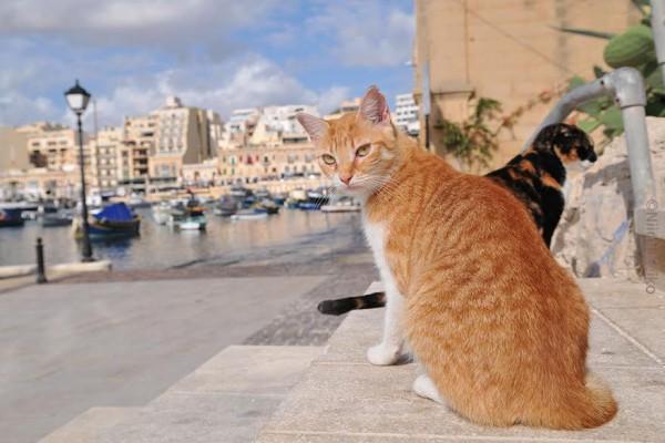 猫の天国マルタ島