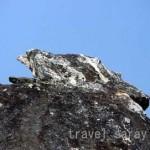 霊鷲山の鷲(岩)〔ラージギル〕