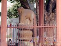 アショカ王柱